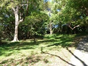 Bronte Park, forest, Sydney, Australia