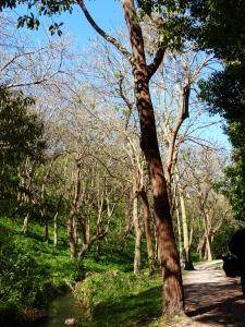 Trees, forest, Bronte Park, Sydney, Australia