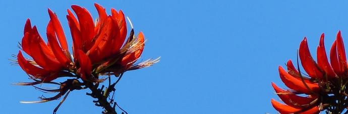 Blue Sky, Bronte, Sydney, Australia