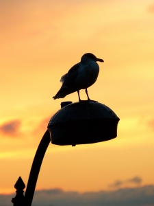 Bird in Sunset
