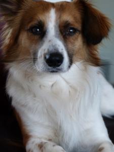 dog, rescue, mix-breed, cuteness