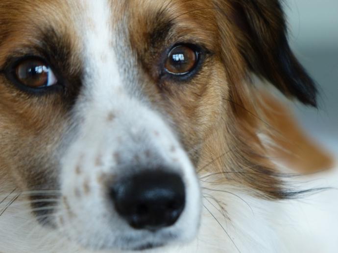 dog, rescue, cuteness, mix-breed