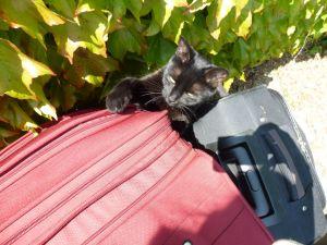 Soleil, péniche, River Seine, 7th arrondissement, houseboat, Eiffel Tower, paradise found, Fifi, cat, black cat, departure
