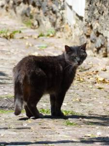 19th arrondissement, Paris, France, Quartier de Mouzaia, cat, cobblestone street