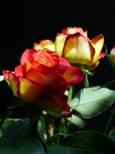 flowers, love, happiness, 6th arrondissement, River Seine, houseboat, péniche, Paris, France, Port Debilly