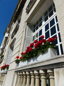 Paris, France, window, flowers