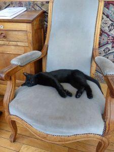 Soleil, péniche, River Seine, 7th arrondissement, houseboat, Eiffel Tower, paradise found, Fifi, cat, black cat