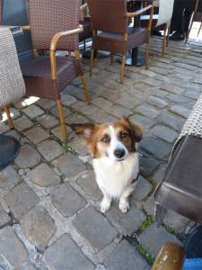 Buster, mix breed, rescue dog, wanting a treat, Amiens, France