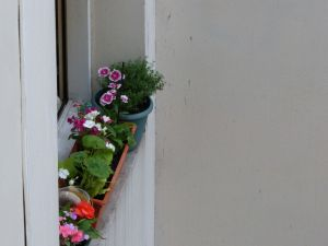 Flowers, window, Paris, France