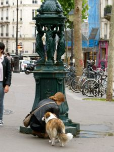dog, street scene, water fountain, Abbesses, Paris, France