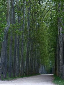 Versailles, Ile-de-France, France, palace, The Palace, gardens, The Grand Trianon, Marie Antoinette's Estate, path, trees