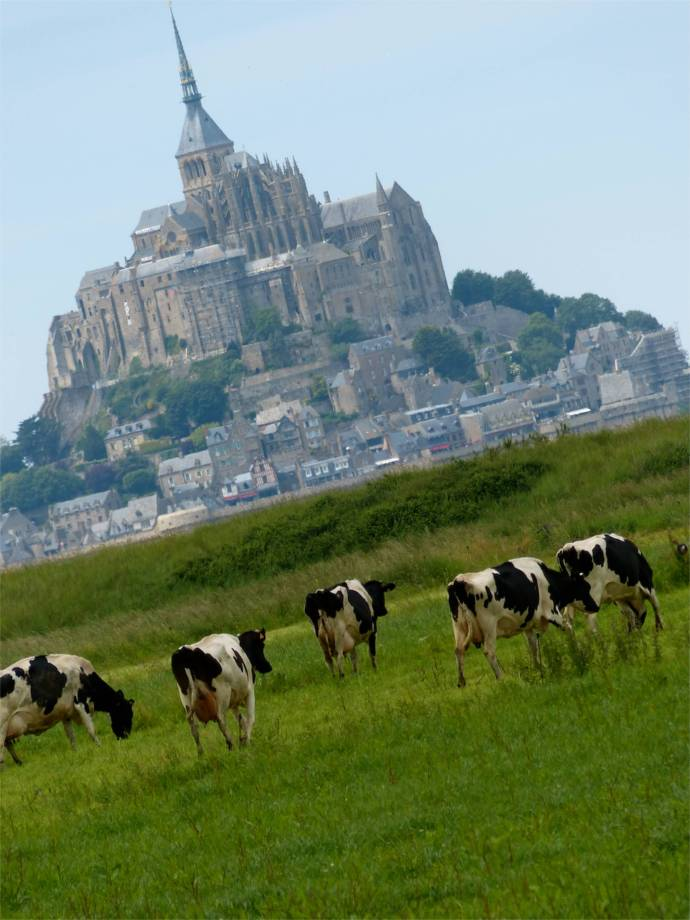 Normandy, France, pilgrimage, abbey, island, cows
