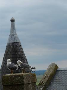 Normandy, France,  pilgrimage, abbey, island, tides, Mont Saint Michel, seagulls, birds