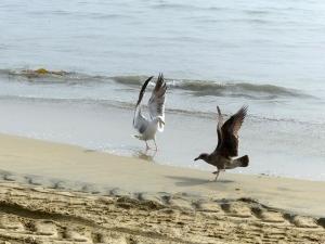 Long Beach, beach, fog, birds