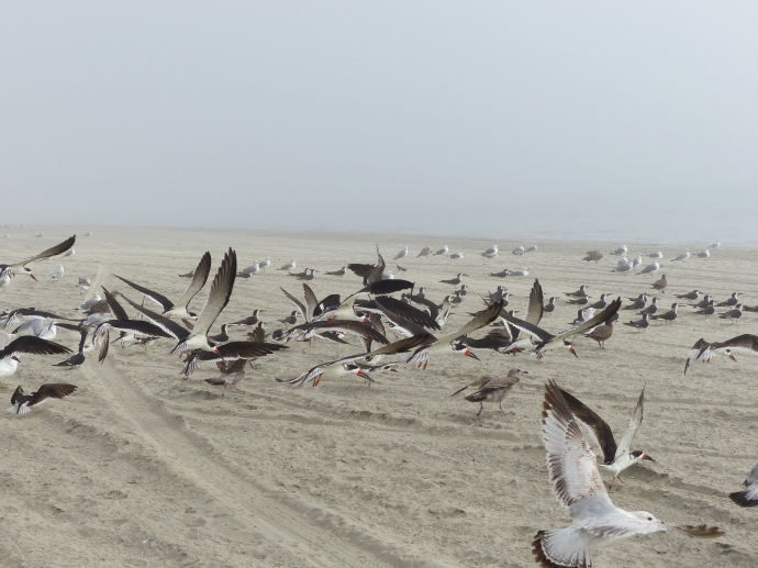 Long Beach, beach, fog, birds