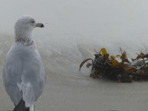 Long Beach, beach, fog