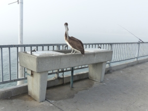 Long Beach, beach, fog, pier